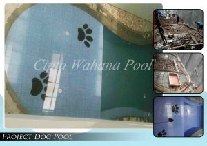 Project Dog Pool